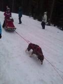 dog sled 2 4.6.13