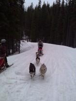 dog sled 4.6.13